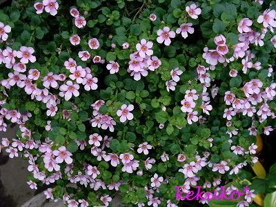 f0170524_12175148.jpg