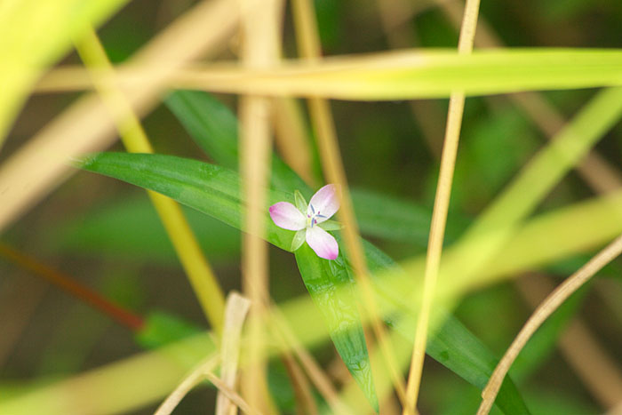 秋の小さな花たち 1_c0067040_23252426.jpg