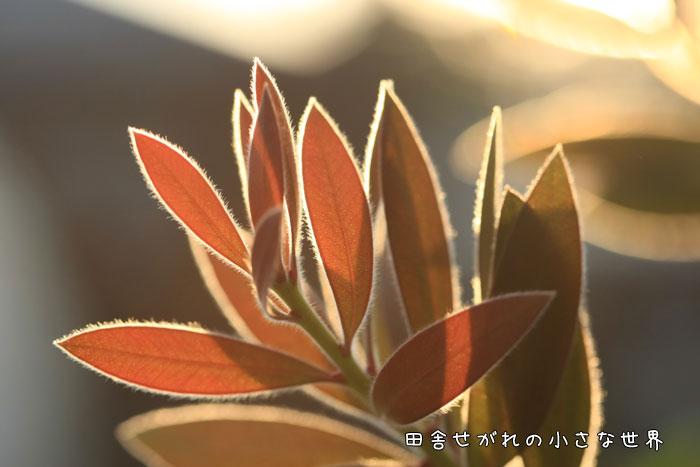 f0195740_8321552.jpg