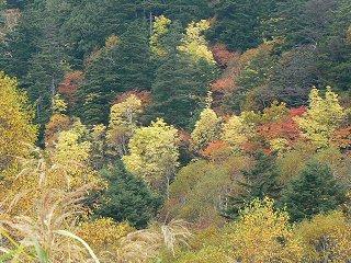志賀高原の紅葉ハイク_f0019247_19433511.jpg