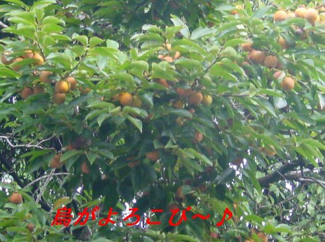 f0179357_925426.jpg