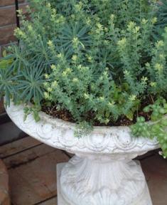 ガーデンのお仕事で、、、_f0029571_1281657.jpg