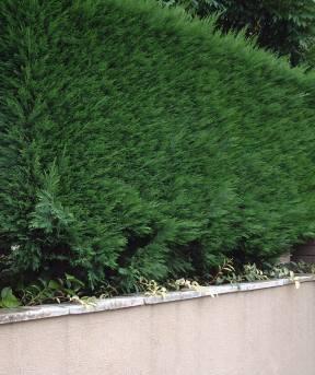 ガーデンのお仕事で、、、_f0029571_2101414.jpg