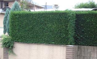 ガーデンのお仕事で、、、_f0029571_29788.jpg