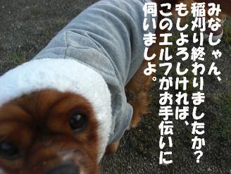 f0170713_112551.jpg