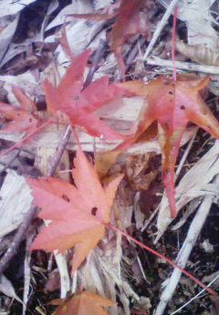 氷ノ山、紅葉開始!_f0101226_2258236.jpg