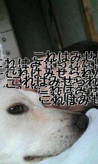 f0195543_12144048.jpg