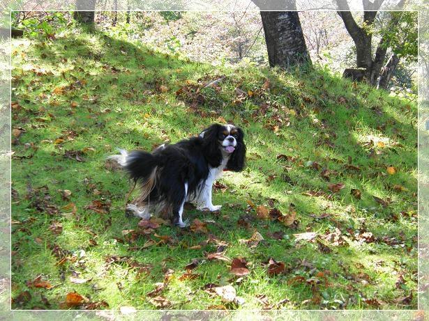 秋の『ポタニカルガーデン』へ~♪_c0145250_18373673.jpg