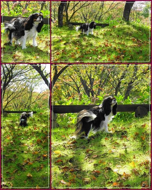 秋の『ポタニカルガーデン』へ~♪_c0145250_18381533.jpg