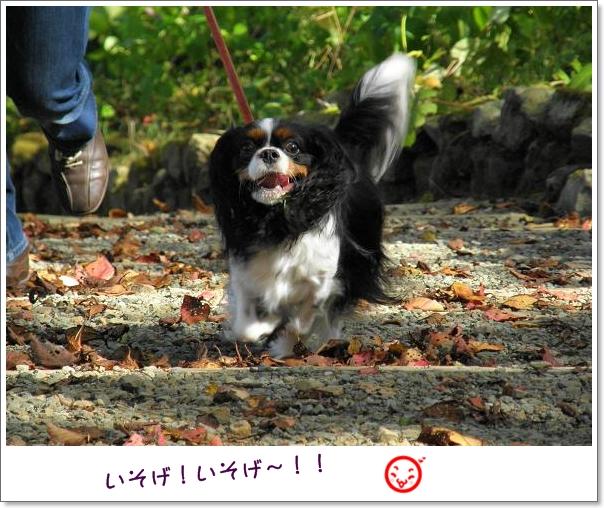 秋の『ポタニカルガーデン』へ~♪_c0145250_18404213.jpg