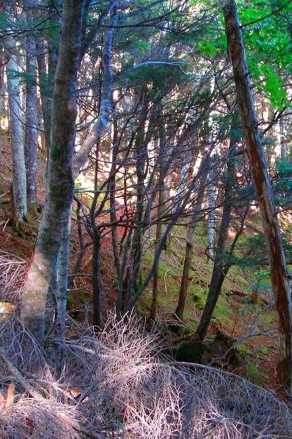 <2008年10月4~5日>南アルプス深南部の秘峰「池口岳」_c0119160_7251474.jpg