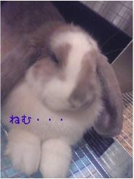 f0196660_10495967.jpg