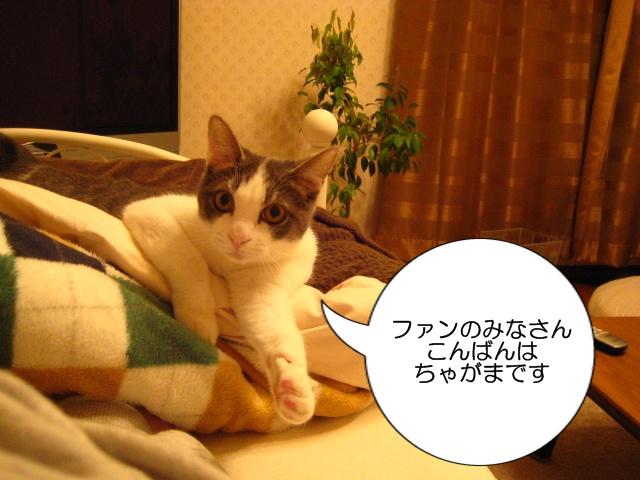 f0184675_0363065.jpg