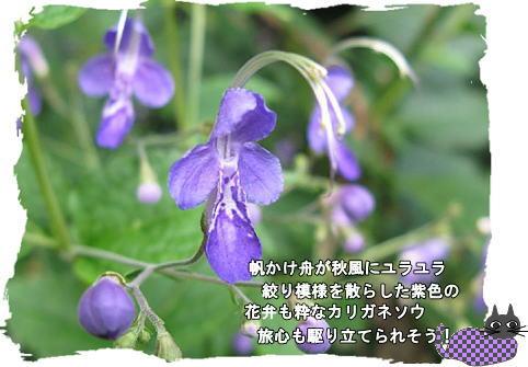 f0137096_21222990.jpg