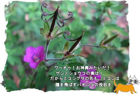 f0137096_21352136.jpg