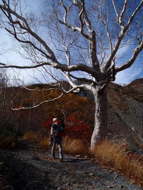 秋晴れの唐松岳_c0177814_10403560.jpg