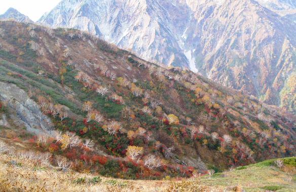 秋晴れの唐松岳_c0177814_11532112.jpg