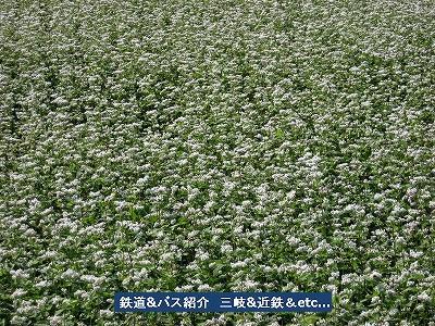 VOL,929  『蕎麦の花』_e0040714_23132097.jpg