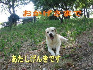 b0008217_23113759.jpg