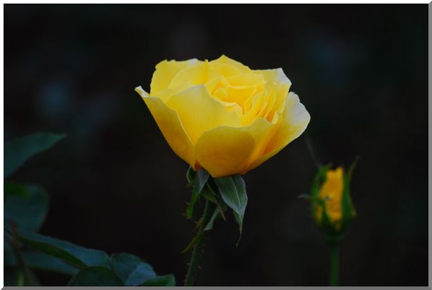 港の見える丘公園の薔薇 (Ⅰ)_d0123528_15584153.jpg