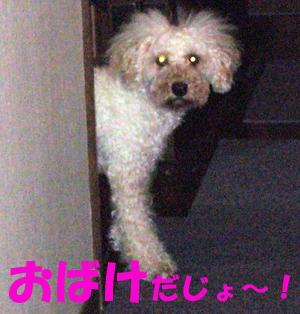 d0070047_1635871.jpg