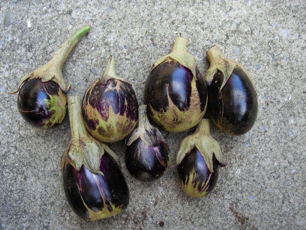 茄子の最後の収穫とブロッコリーの様子_c0053863_1722527.jpg
