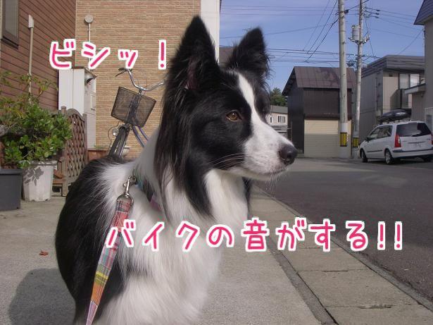 d0122403_20072.jpg