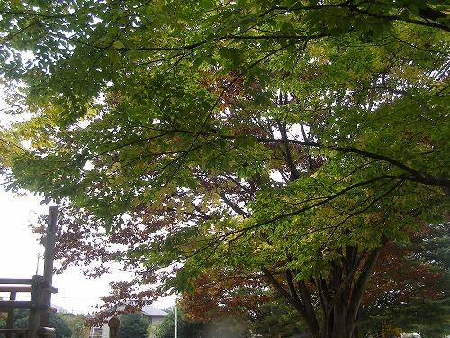 秋色に・・・_d0147812_1153215.jpg