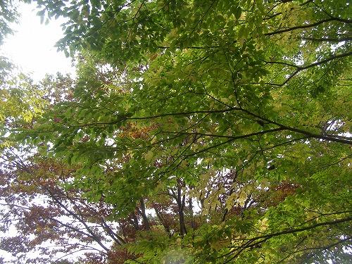 秋色に・・・_d0147812_11544357.jpg