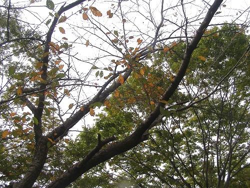 秋色に・・・_d0147812_11595746.jpg