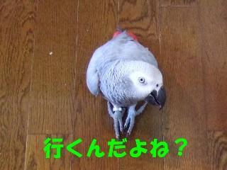 c0133013_1324436.jpg