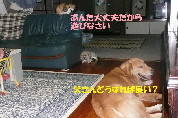 f0114128_20344832.jpg
