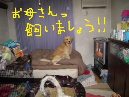 f0176830_16183764.jpg