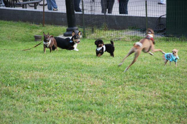 ニューヨークの犬達_c0099133_14334625.jpg