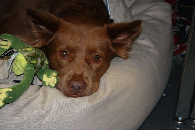 ニューヨークの犬達_c0099133_14564551.jpg
