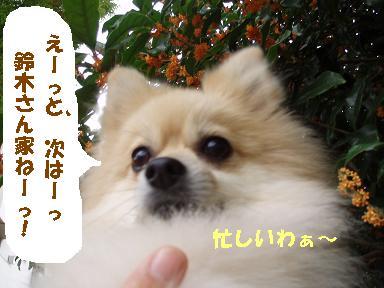 c0179136_1432883.jpg