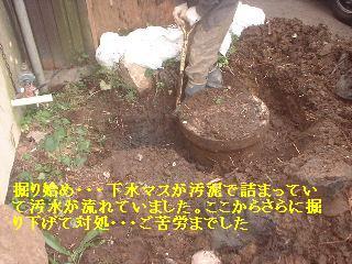 f0031037_2044226.jpg
