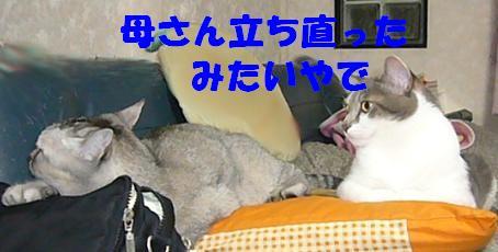 f0002743_13405215.jpg