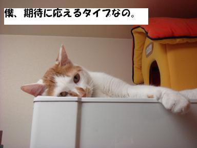 f0046854_2003337.jpg