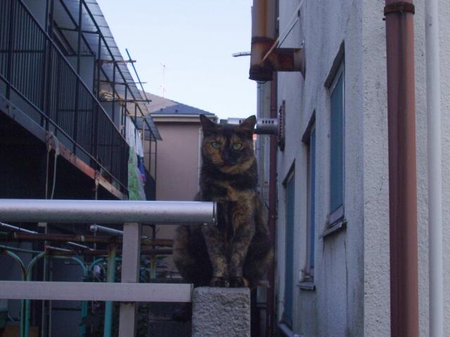 サビ猫ちゃんです_f0188659_2348116.jpg