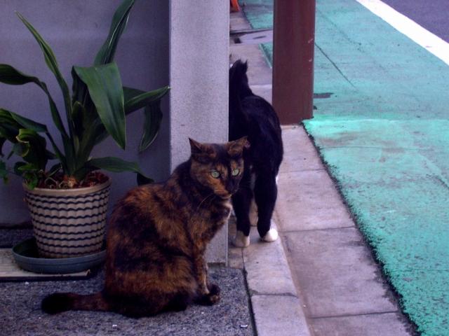 サビ猫ちゃんです_f0188659_23482347.jpg