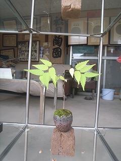 松下凡才の 「盆栽」_f0059988_9212073.jpg