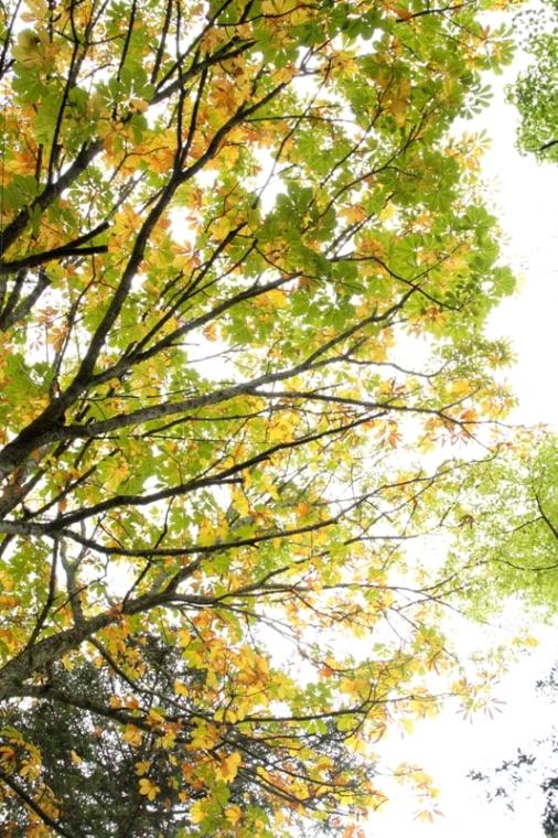 秋の色_f0091207_17431534.jpg