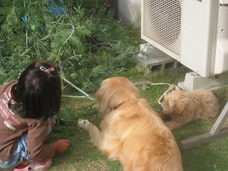 10月12日 じゃまをする人(犬)たち_e0136815_8143585.jpg