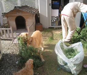 10月12日 じゃまをする人(犬)たち_e0136815_8172712.jpg