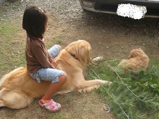 10月12日 じゃまをする人(犬)たち_e0136815_8202068.jpg