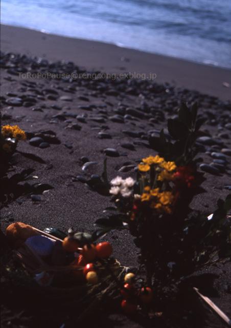 花と海と_e0132518_23112219.jpg