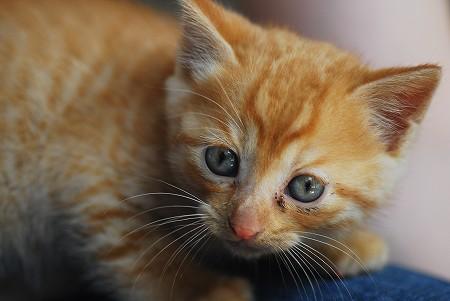 子猫さん_a0020021_2153595.jpg