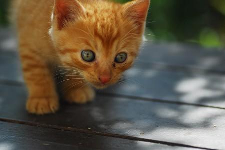 子猫さん_a0020021_21541965.jpg