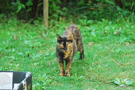 子猫さん_a0020021_21571238.jpg